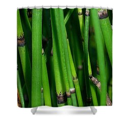 Shower Curtain featuring the photograph Equisetum by Judi Bagwell