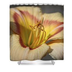 Ethel Brown Daylily 3 Shower Curtain by Teresa Mucha