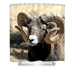 European Big Horn - Mouflon Ram Shower Curtain by Teresa Zieba
