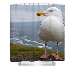 European Herring Gull Larus Argentatus Shower Curtain by Trish Punch