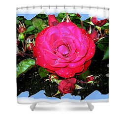 Europeana Roses And Raindrops Shower Curtain by Will Borden