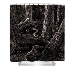 Evening Pines Shower Curtain