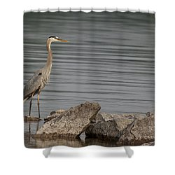 Ever Alert Shower Curtain by Eunice Gibb