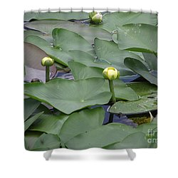 Everglade Beauty Shower Curtain