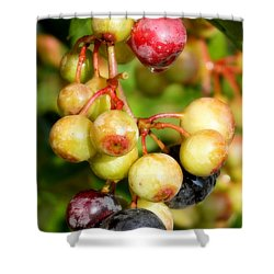 Expectation Shower Curtain by Karen Wiles
