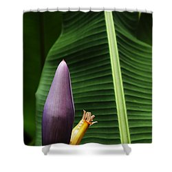 Exploring Light In Nature Shower Curtain
