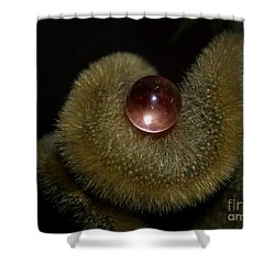 Eye Of The Cacti Shower Curtain