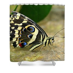 Eye To Eye With A Butterfly Shower Curtain