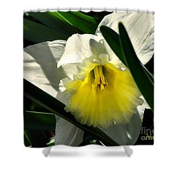 Shower Curtain featuring the photograph Face The Sun by Nava Thompson