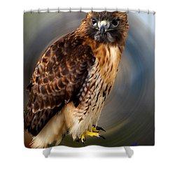 Falco 2 Tinnunculus Vf Shower Curtain by Colette V Hera  Guggenheim