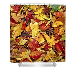 Fall  Autumn Leaves Shower Curtain