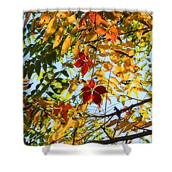 Shower Curtain featuring the photograph Fall Beginnings by Mary Bedy