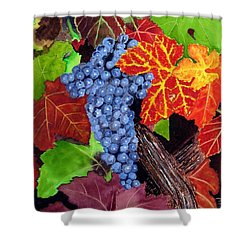 Fall Cabernet Sauvignon Grapes Shower Curtain
