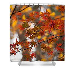 Fall Color Montage Shower Curtain by Mike Reid