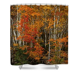 Fall Colors Grand Mesa Shower Curtain by Ernie Echols