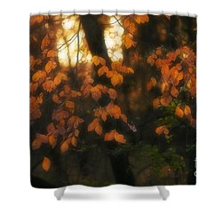 Fall Colours Shower Curtain by Art Whitton