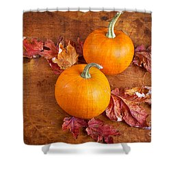 Fall Decorative Pumpkins Shower Curtain by Verena Matthew
