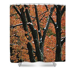 Fall Foliage Of Maple Trees After An Shower Curtain by Tim Laman
