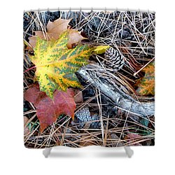 Fall Forest Floor Shower Curtain by Will Borden