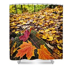 Fall Leaves In Forest Shower Curtain by Elena Elisseeva