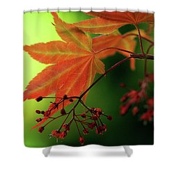 Fall Leaves Shower Curtain by Michelle Joseph-Long