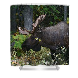 Shower Curtain featuring the photograph Fall Master by Doug Lloyd