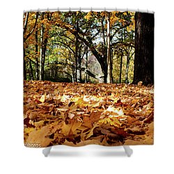 Shower Curtain featuring the photograph Fall On The Ground by Rachel Cohen