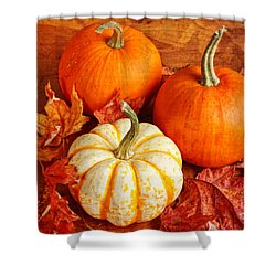 Fall Pumpkins And Decorative Squash Shower Curtain by Verena Matthew