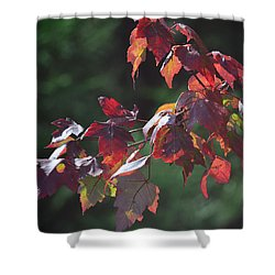 Fall Red Shower Curtain by Sandi OReilly