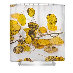 Fallen Autumn Aspen Leaves Shower Curtain by James BO  Insogna