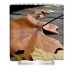 Fallen Leaf Shower Curtain by Jack Schultz