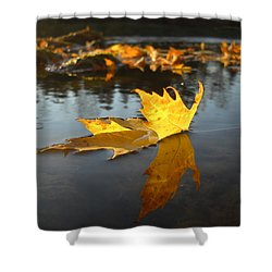 Fallen Maple Leaf Reflection Shower Curtain