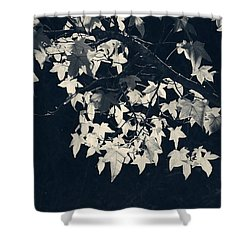 Falling Stars Shower Curtain by Laurie Search