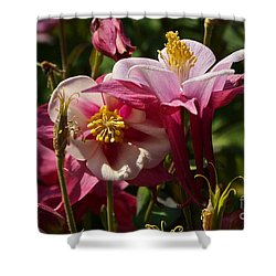 Fan Columbines Shower Curtain by Byron Varvarigos