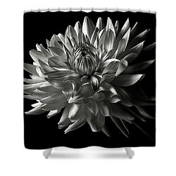 Fancy Dahlia In Black And White Shower Curtain