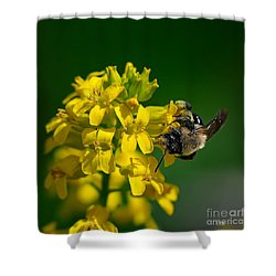 Fanfare For The Common Bumblebee Shower Curtain by Lois Bryan
