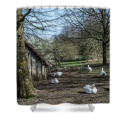 Farmyard Geese Shower Curtain by Dawn OConnor