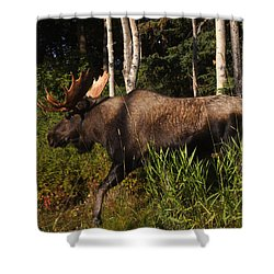 Shower Curtain featuring the photograph Fast Mover by Doug Lloyd