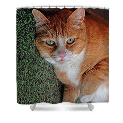 Fat Cats Of Ballard 6 Shower Curtain