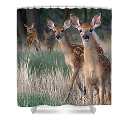 Fawns Fawns Shower Curtain by Bill Stephens