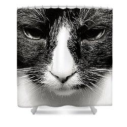 Fearless Feline Shower Curtain