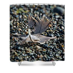 Shower Curtain featuring the photograph White Feather by Marilyn Wilson
