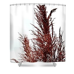 Feather Top Shower Curtain by Maria Urso