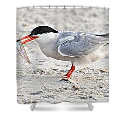 Feeding Time Shower Curtain by Dave Mills