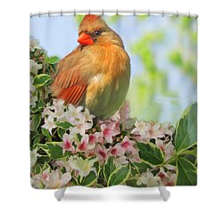 Shower Curtain featuring the photograph Female Cardnial In Wegia Digital Art by Debbie Portwood