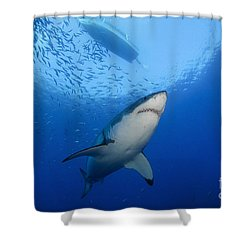 Female Great White, Guadalupe Island Shower Curtain by Todd Winner