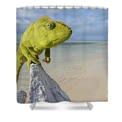 Female Oustalet's Chameleon Shower Curtain by Alex Rosenfield and Photo Researchers