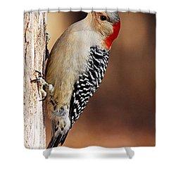 Female Red-bellied Woodpecker 5 Shower Curtain by Larry Ricker