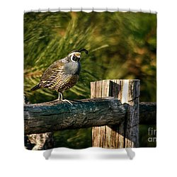 Fence Rider Shower Curtain by Robert Bales