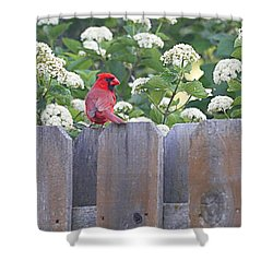 Shower Curtain featuring the photograph Fence Top by Elizabeth Winter